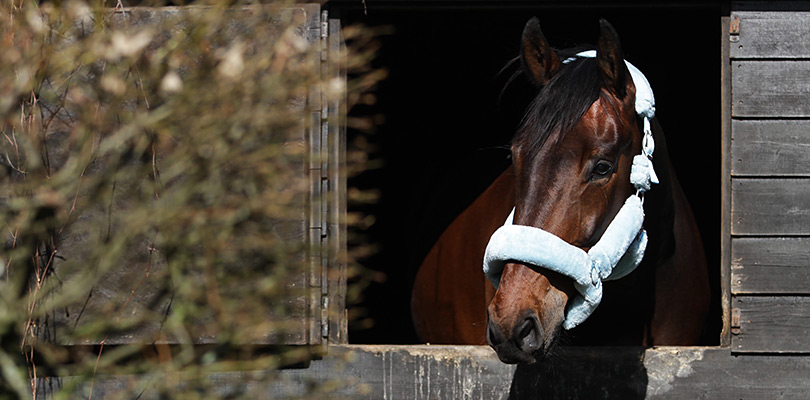 Banner one - Halters