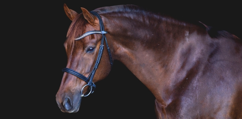 Banner two - Bridles & bits