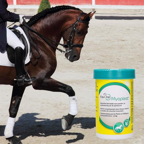 Discover the power pearls of Equitop Myoplast