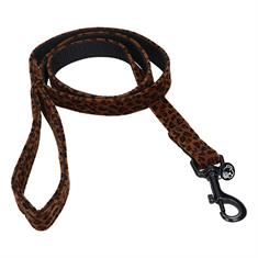 Dog Leash Kentucky