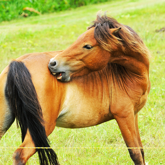 Finecto Horse: protect your horse against ectoparasites!