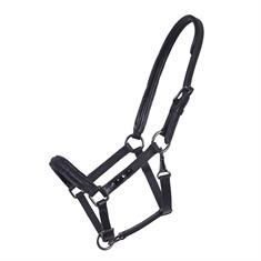 Foal Halter QHP Leather Shimmer