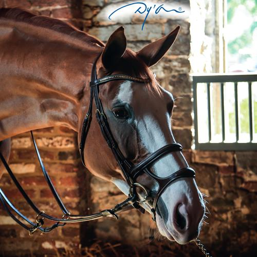 Guestblog Dy'on: a guide through the bridle jungle