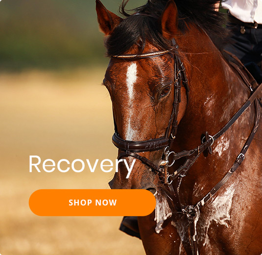 Horse recovery